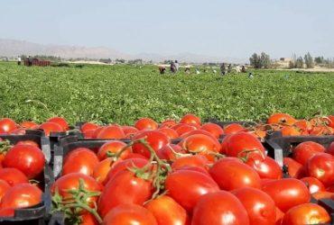 فروش زمین کشاورزی در ورامین
